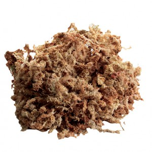 New Zealand Sphagnum Moss - 80 Cubic Inches