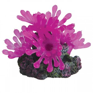 Bubble Polyp - Small - Pink