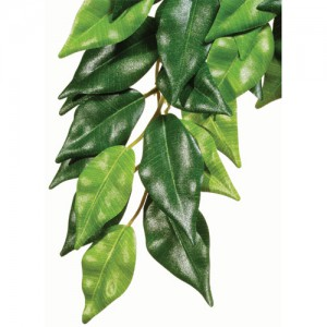 Hanging Silk Ficus - Small