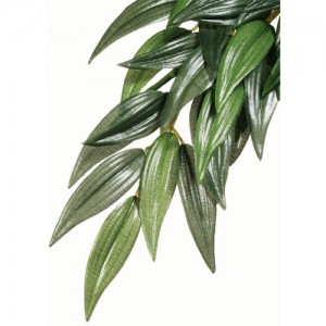 Hanging Silk Ruscus - Small