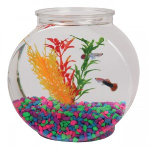Tom Aquatics Plastic Goldfish Bowl - Drum - 0.5 gal