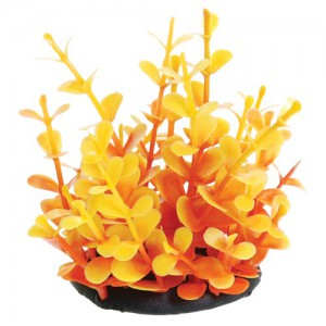 Orange Moneywort - 2.5""