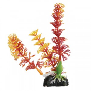 """Cabomba - Red - 5"""""""