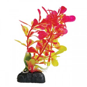 Ludwigia - Red - 4.5""