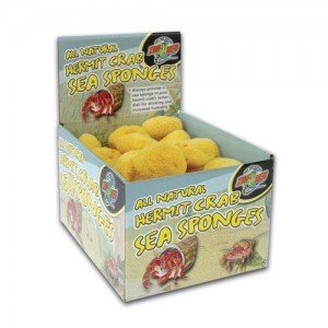 Hermit Crab Sea Sponge