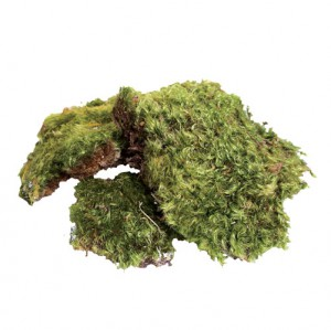 All Natural Frog Moss - 80 Cubic Inches