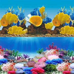"Rainbow Reef/Bumblebee Reef Reversible Background - 24"" - Sold by the Foot"