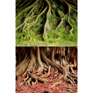 "Amazon Root/Grassy Root Reversible Background - 24"" - Sold by the Foot"