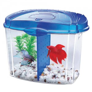 Betta Bowl Aquarium Kit - Blue - 0.5 gal