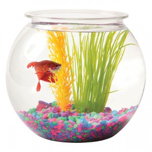 Tom Aquatics Plastic Goldfish Bowl - Round - 1 gal